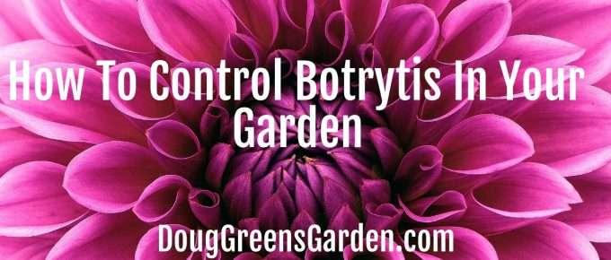 control botrytis