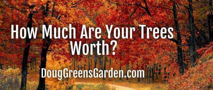 how much are trees worth