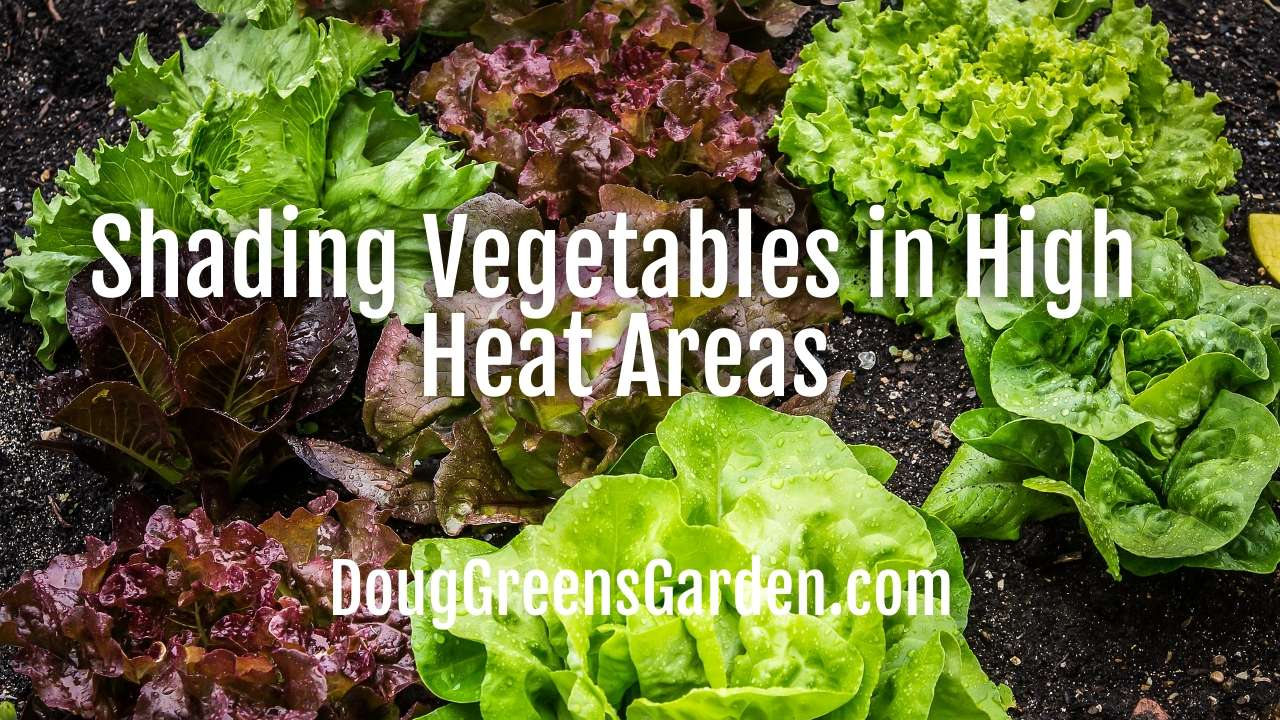 Shading Vegetables in High Heat Areas