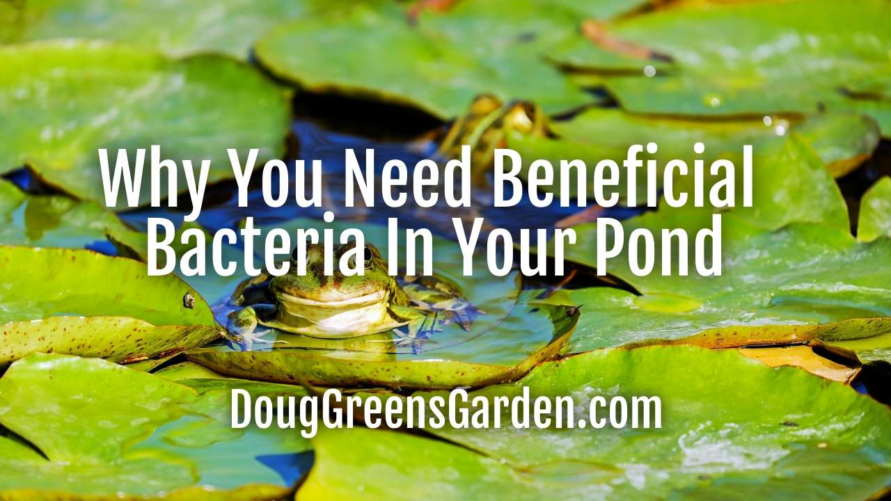 Why You Need Beneficial Bacteria In Your Pond