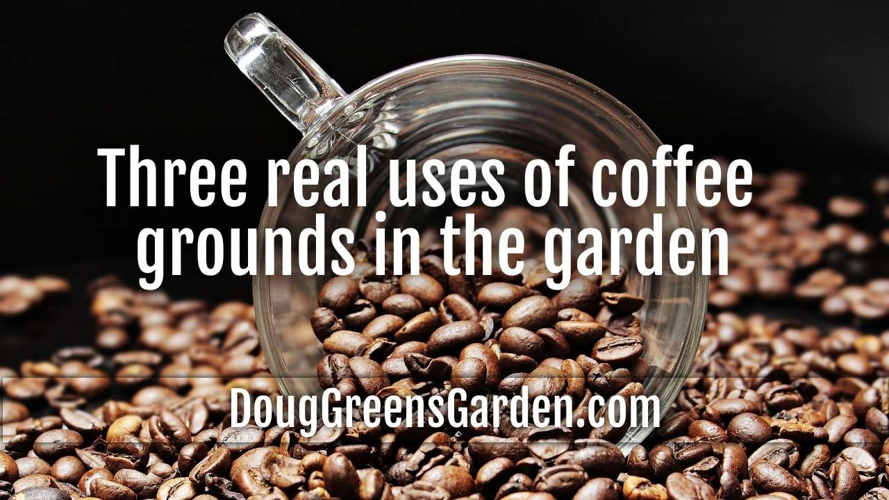 Three Real Uses For Coffee Grounds And Gardening