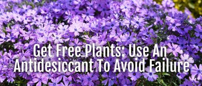 free plants using antidesiccant