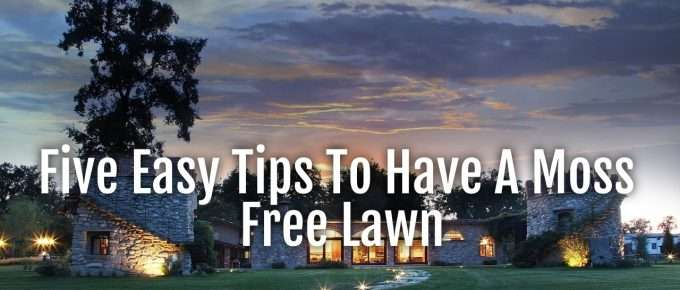 moss free lawn