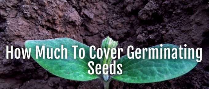 how much to cover seeds