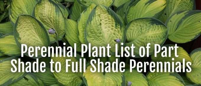 perennial plant list shade