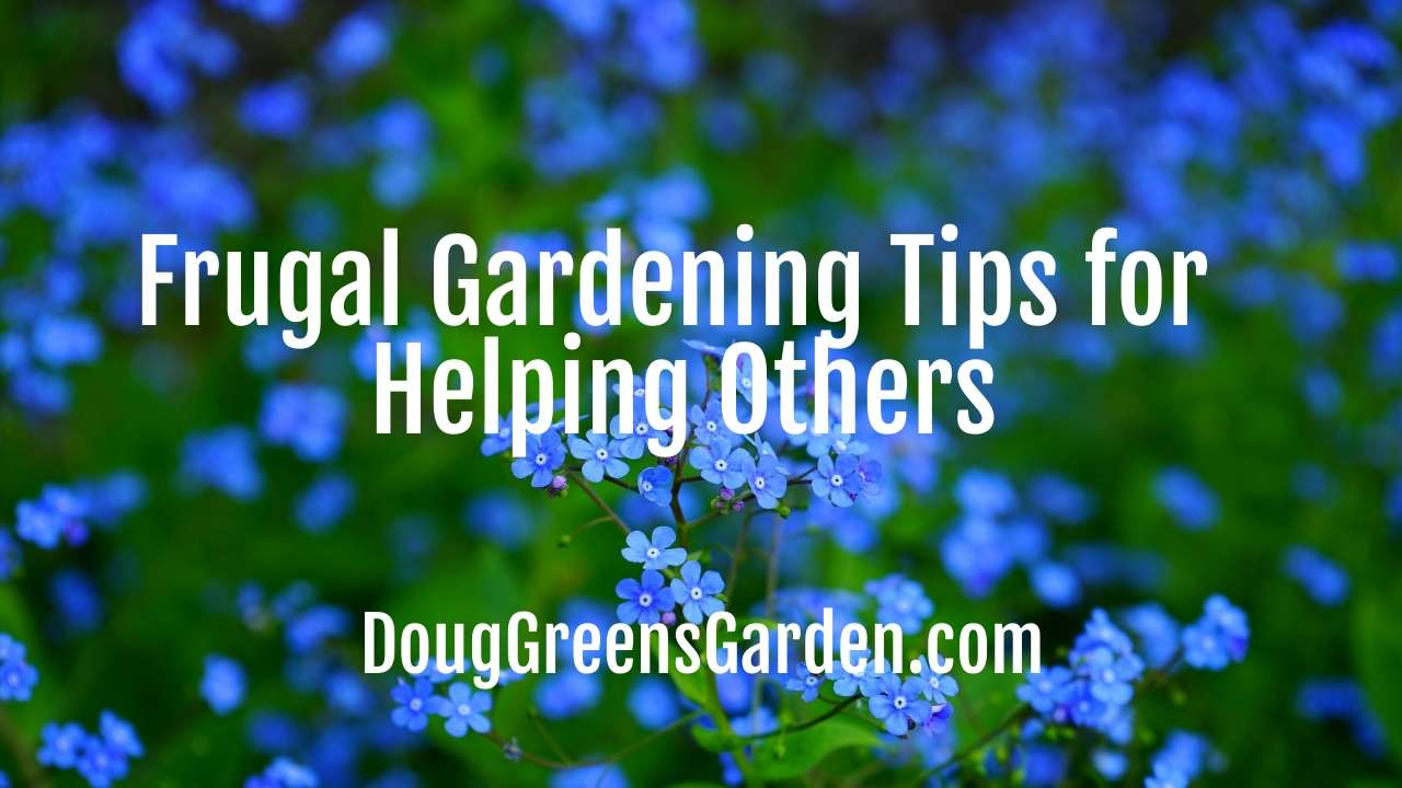 Frugal Gardening Tips for Helping Others