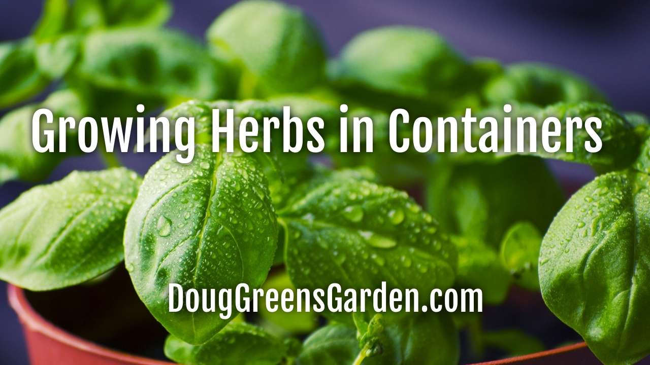 You Can Succeed Growing Herbs in Containers