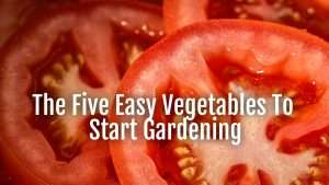 five easy vegetables