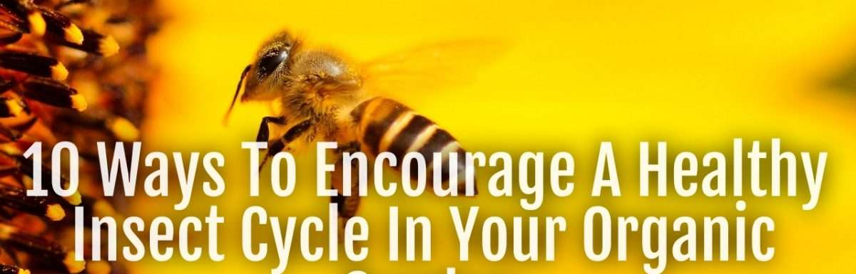 healthy insect cycle