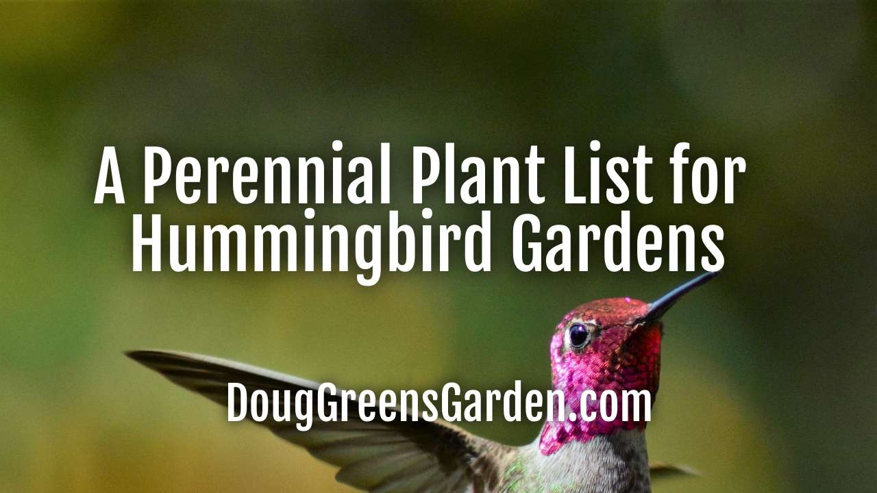 A Perennial Plant List for Hummingbird Gardens