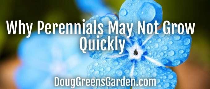 perennials don't grow