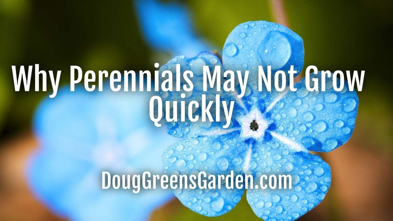 Why Perennials May Not Grow Quickly When You First Plant Them