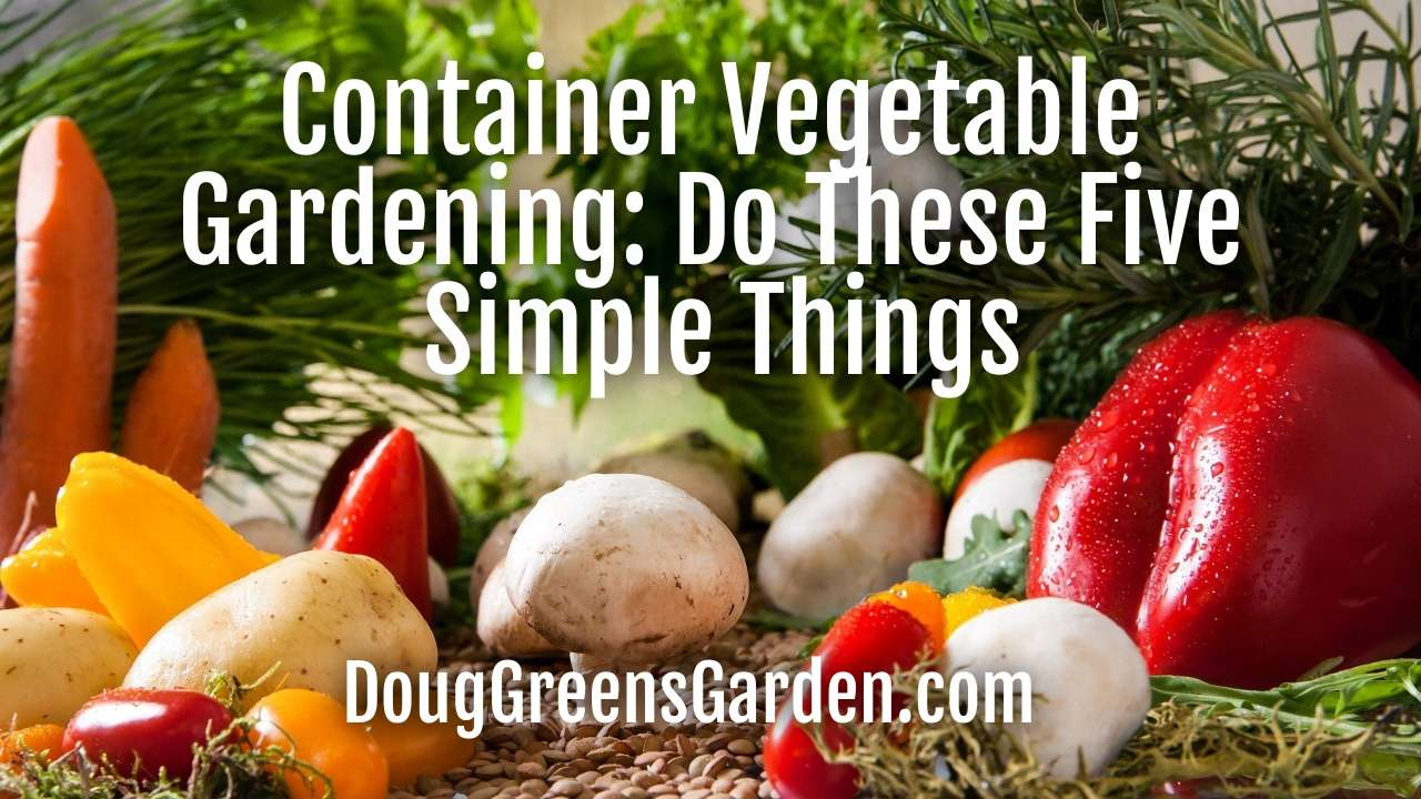 Container Vegetable Gardening: Do These Five Simple Things