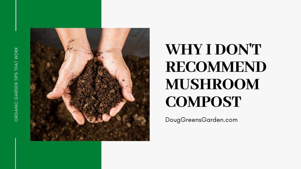 Why I Don't Recommend Mushroom Compost