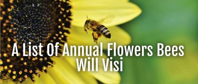 list annual flowers bees