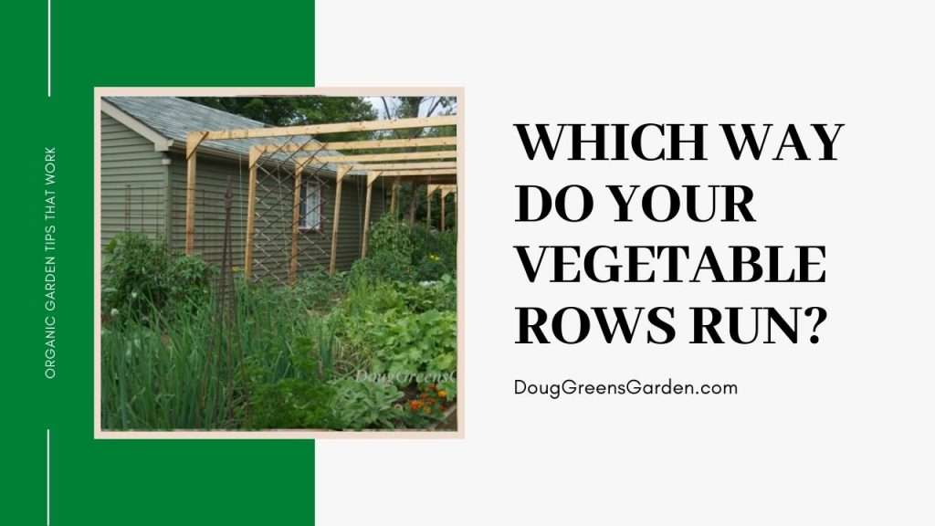which way do your vegetable rows run