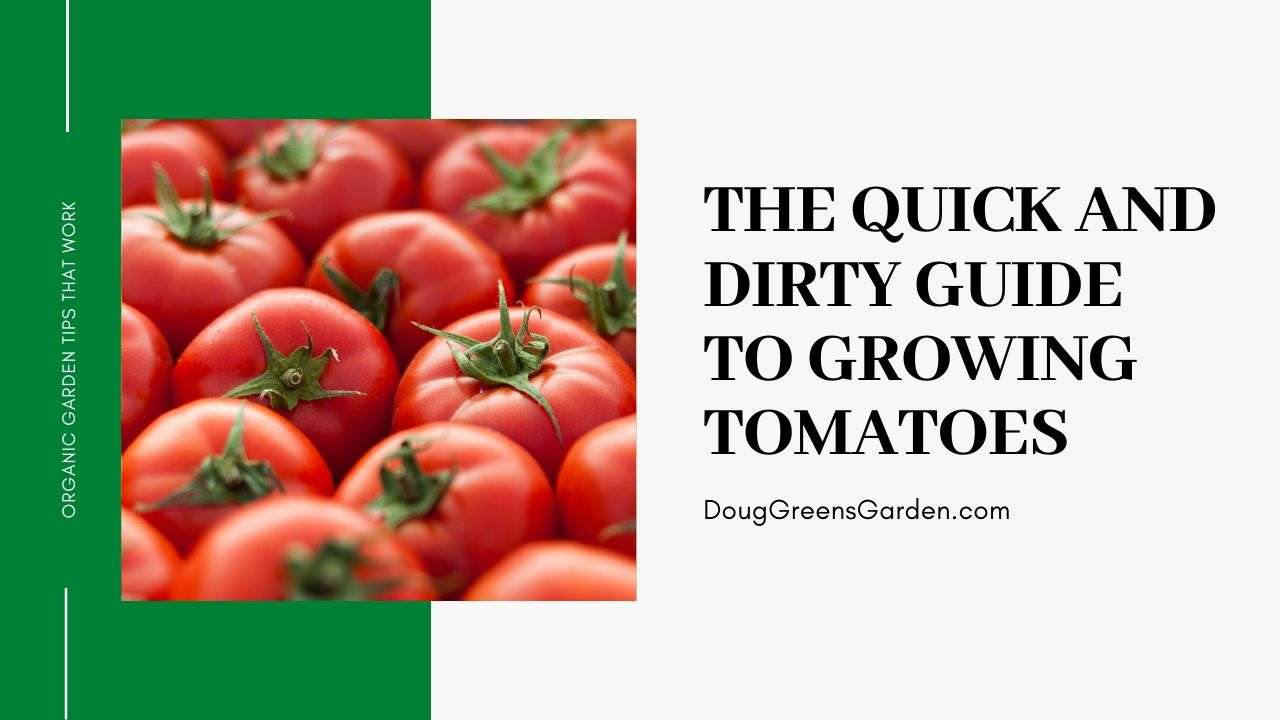 The Quick and Dirty Guide To Growing Tomatoes