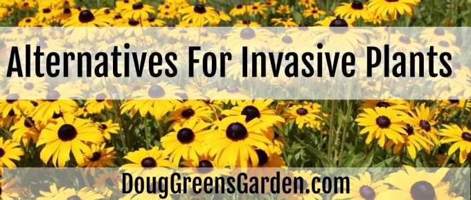 alternatives invasive plants