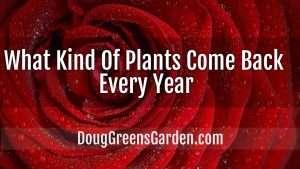 kinds of plant back