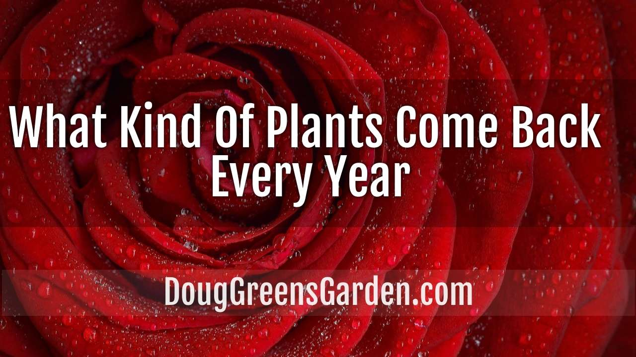 What Kind Of Plants Come Back Every Year?