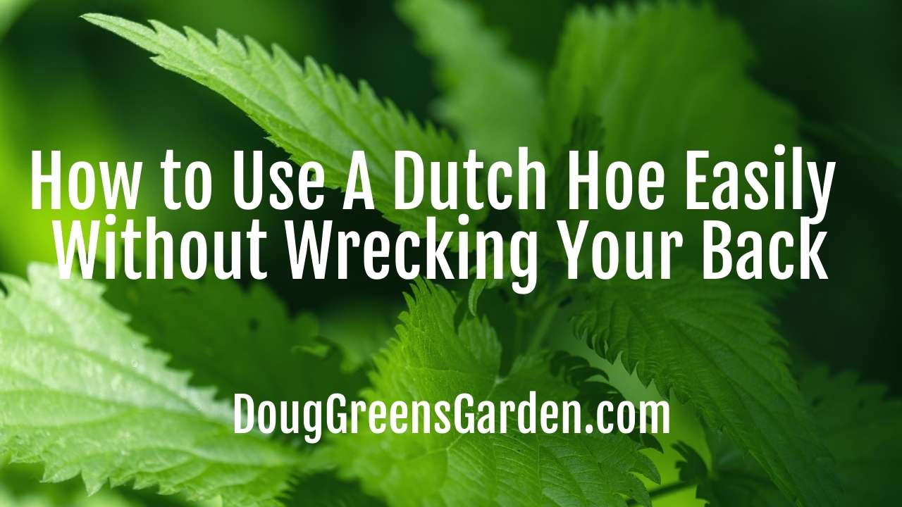 How to Use A Dutch Hoe Easily Without Wrecking Your Back