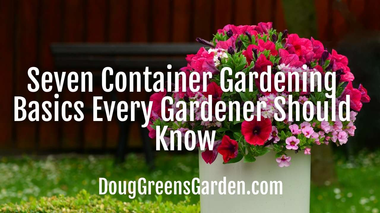 Seven Container Gardening Basics Every Gardener Should Know